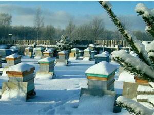 Зимовка пчёл на воле