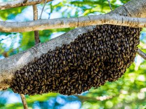 Как развиваются пчёлы?