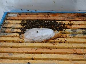 Зимняя подкормка пчёл